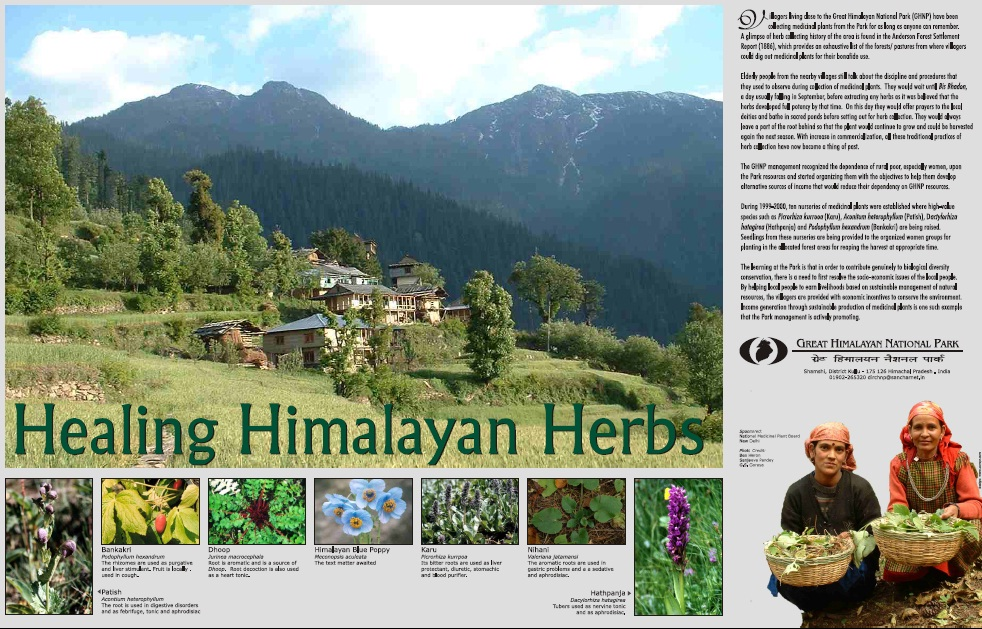 Healing Himalayan Herbs Poster