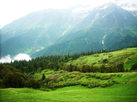 Dhel Meadow at 3737m alt. A paradise for both botanist and zoologist.