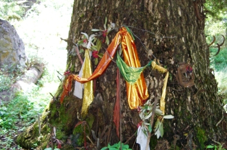 A devta tree at the base of a hill in GHNP