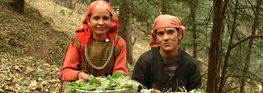 4.-Women-with-Medicinal-Plants-collected-from-Ecozone