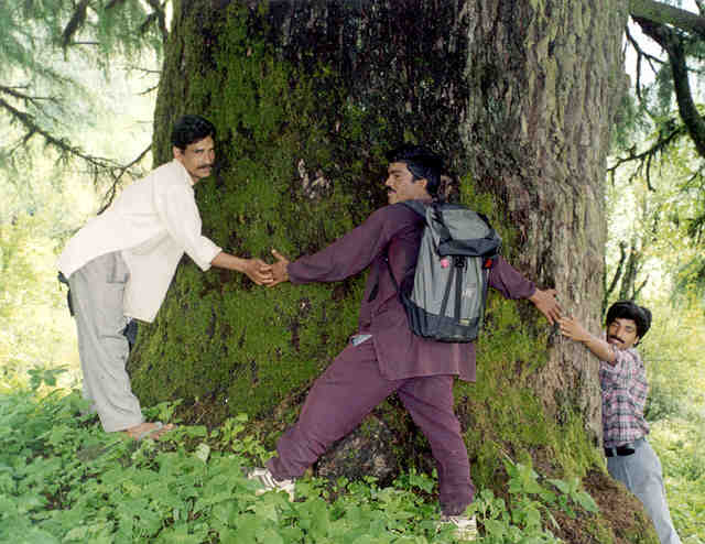 Villagers take a great pride in demonstrating the outstanding trees in their vicinity.