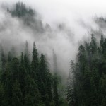A conifer forest of GHNP