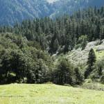 Dhel Meadow GHNP