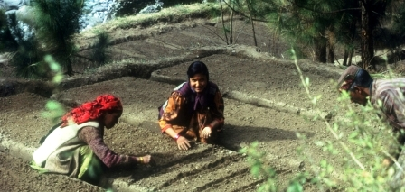 Many women prefer to work in the nurseries located in the ecozone of the Great Himalayan National Park.
