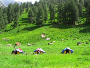 S5.P8 Parkachi Camping site (3,000 m), Sainj Valley