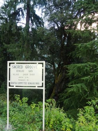 A Sacred Grove called Ringoo Van in the ecozone of GHNP (Sainj Valley)