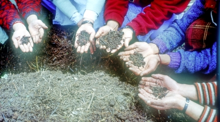 Vermicomposting is one alternative source of livelihood by the members of WSCGs in GHNP ecozone.